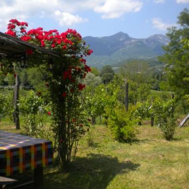 italian villa rental in le marche