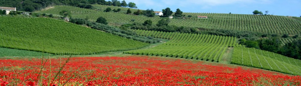 Italy walking holidays in Le Marche poppy fields