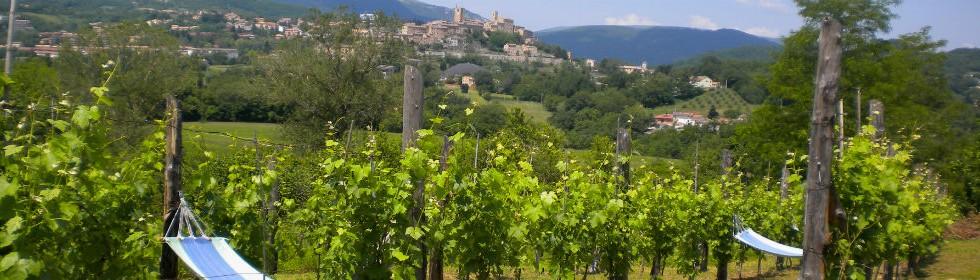 Sarnano from the vineyard at Villa San Raffaello