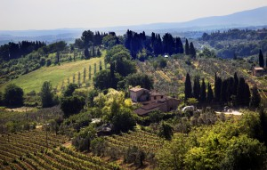 Italian vineyard tours le marche