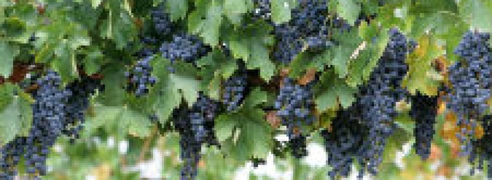 villa and vineyard rental italy