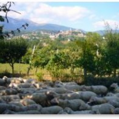 rural le marche holiday
