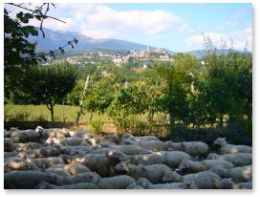 responsible travel -sheep outside Marche villa