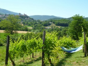marche wine holiday