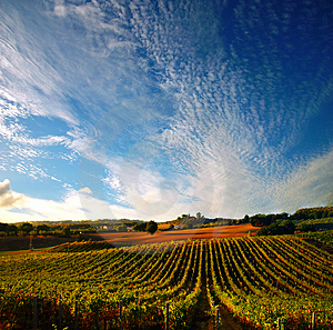winery tour Le Marche Italy
