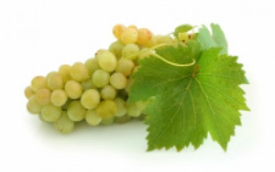 vineyard tours and white wine in Le Marche italy