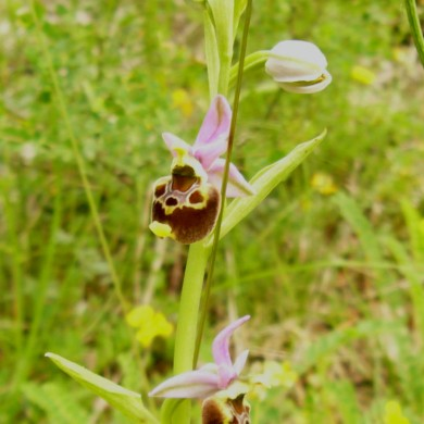 wild flower spotting le marche