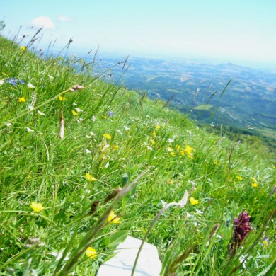 wild flower spotting marche italy