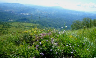 mountain flower vacations italy