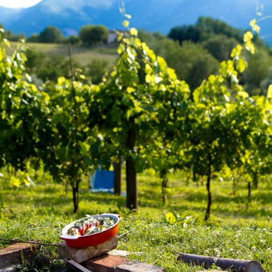 food & wine Marche Italy
