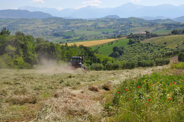 biodynamic farming italy
