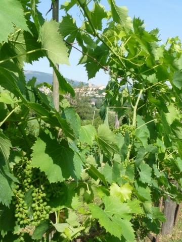 Organic produce & wine Italy