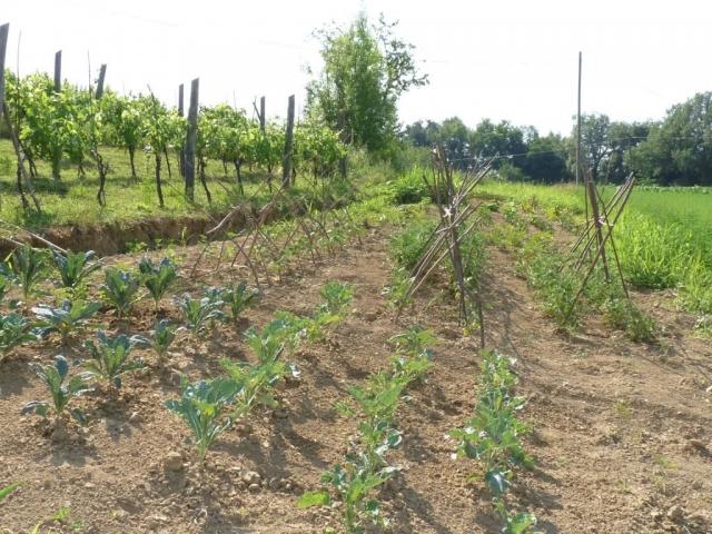 eco friendly farmstay Italy