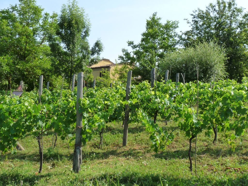From farm to table holidays Italy