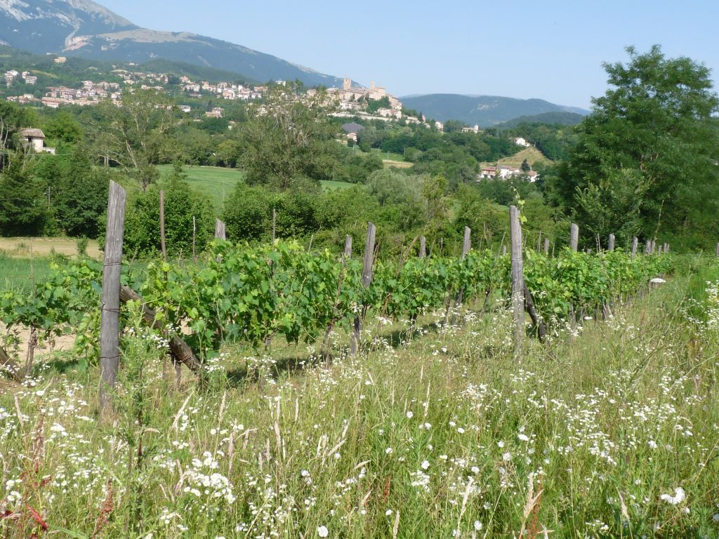 Italian Farm holidays